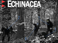 Rozwiązanie konkursu Echinacea