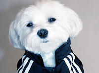 "Adidas - Luxirare ""dres dla psa"""
