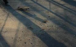 Samotna deskorolka